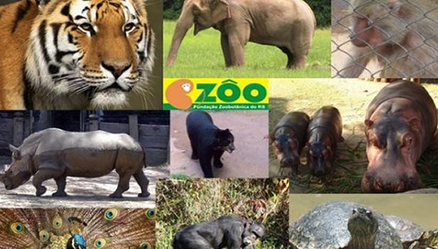 zoologico de porto alegre